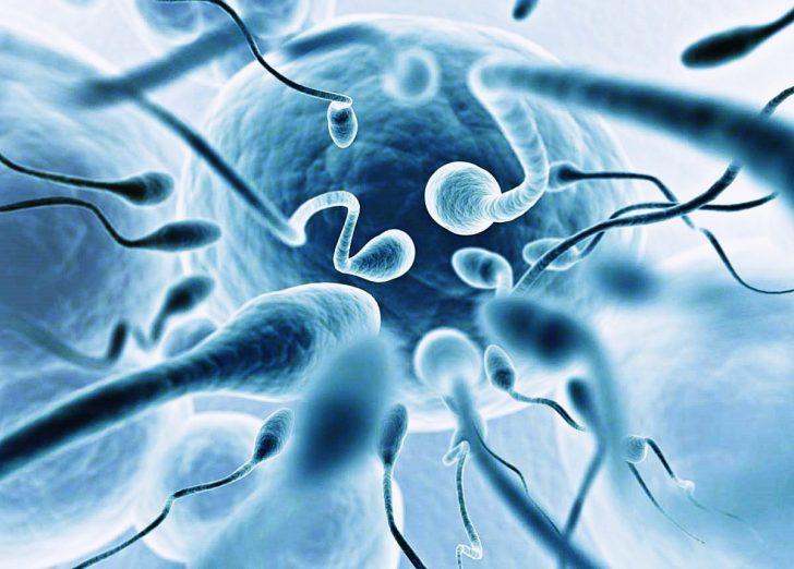 Сперматозоиды единичные
